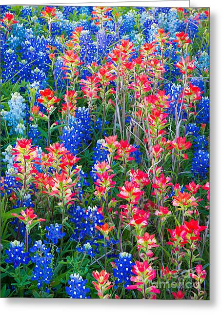 Bluebonnet Scene Greeting Cards - Texan Quilt Greeting Card by Inge Johnsson