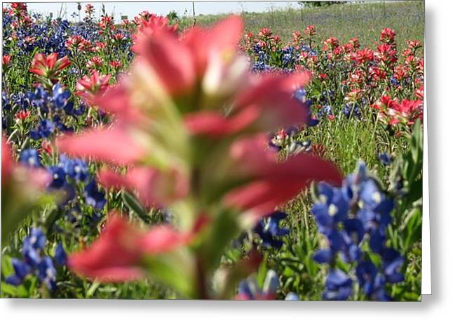 Wimberley Greeting Cards - Texas Beauties Greeting Card by David  Norman