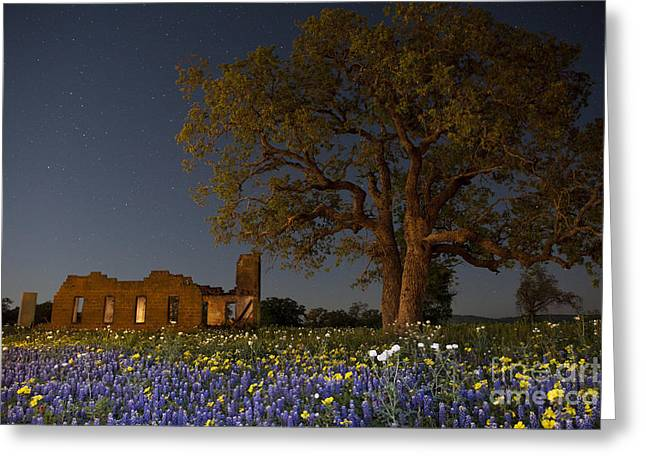Moonlit Night Greeting Cards - Texas Blue Bonnets at Night Greeting Card by Keith Kapple