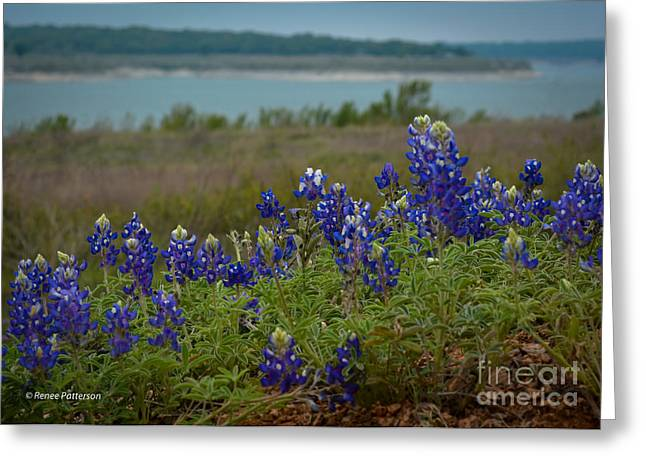 Wild Flowers Of Texas Greeting Cards - Texas Blue Bonnets Greeting Card by Renee Patterson