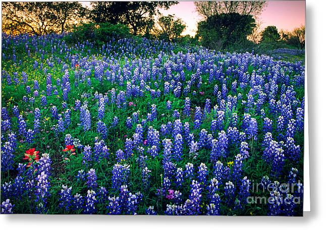 Bluebonnet Landscape Greeting Cards - Texas Bluebonnet Field Greeting Card by Inge Johnsson