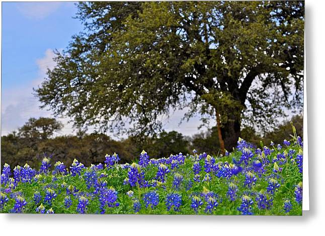 Wild Flowers Of Texas Greeting Cards - Texas Bluebonnet Field Greeting Card by Kristina Deane