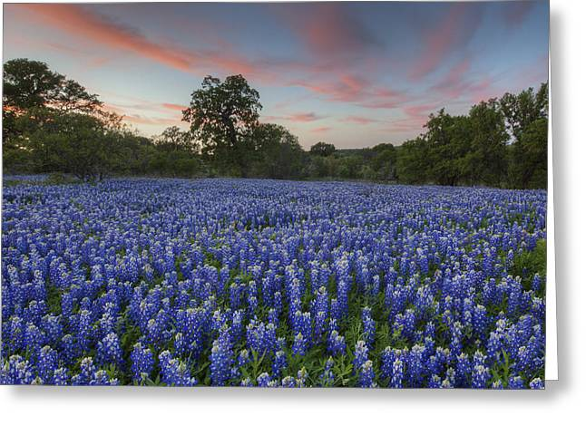 Wild Flowers Of Texas Greeting Cards - Texas Bluebonnet Images - Evening in the Texas Hill Country 1 Greeting Card by Rob Greebon