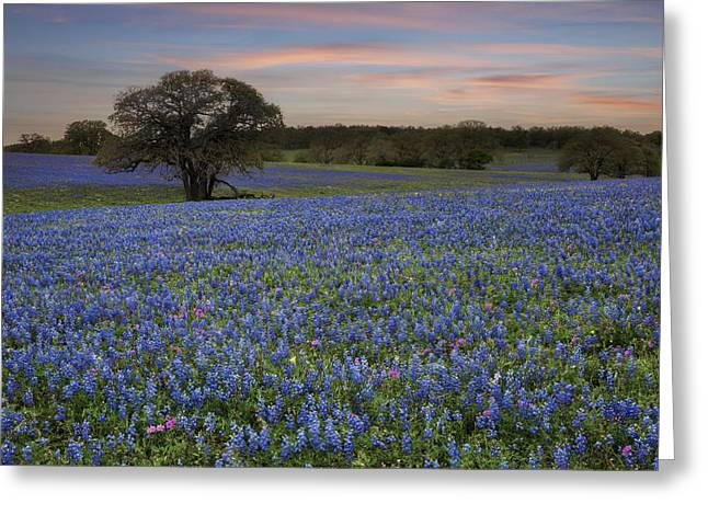 Wildflower Photos Greeting Cards - Texas Bluebonnet Images - Bluebonnet Evening in the Country Greeting Card by Rob Greebon