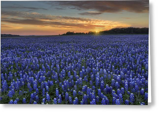 Wildflower Photos Greeting Cards - Texas Bluebonnet Images - Sunset at Turkey Bend 3 Greeting Card by Rob Greebon