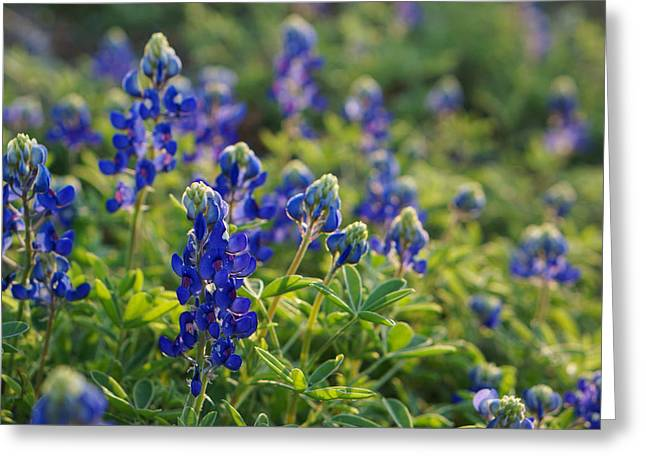 Greeting Cards - Texas Bluebonnets In Early Sun Greeting Card by Lisa  Spencer