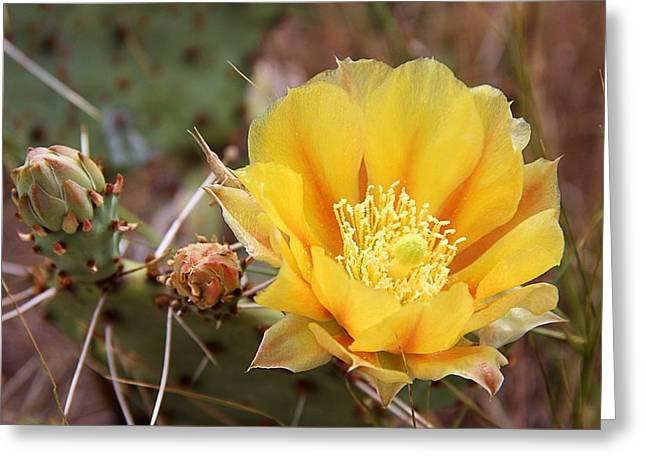 Elizabeth Budd Greeting Cards - Texas Cactus Greeting Card by Elizabeth Budd