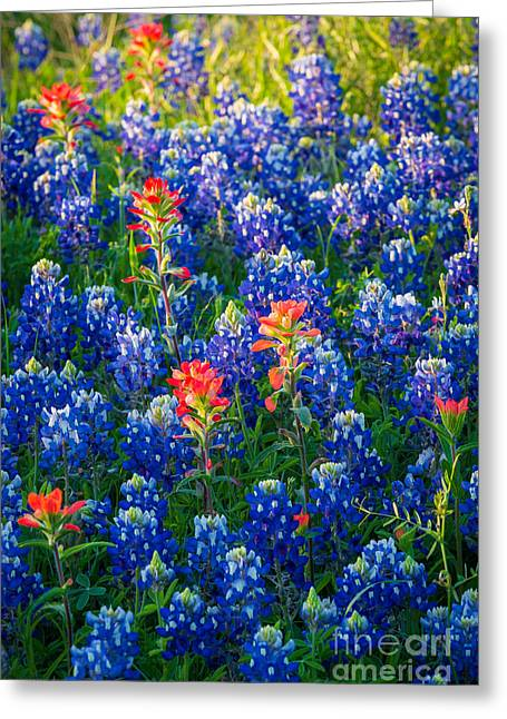 Bluebonnet Scene Greeting Cards - Texas Colors Greeting Card by Inge Johnsson
