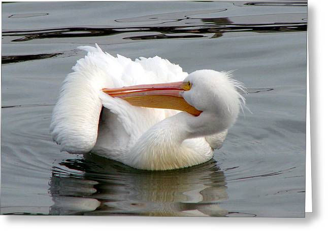 Water Bodies Of Texas Greeting Cards - Texas Gulf Coast White Pelican Greeting Card by Linda Cox