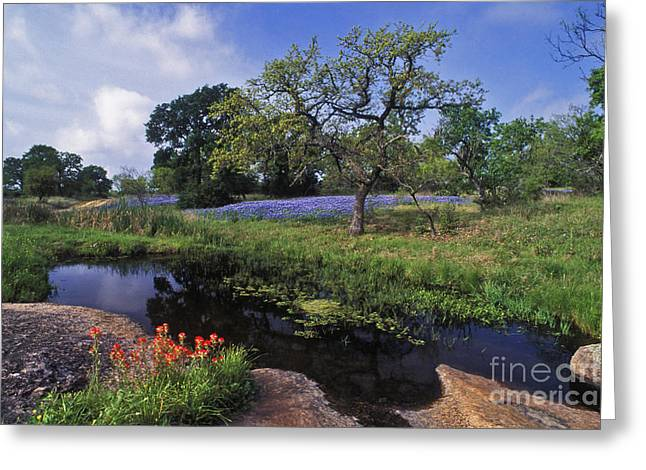 Bluebonnet Landscape Greeting Cards - Texas Hill Country - FS000056 Greeting Card by Daniel Dempster