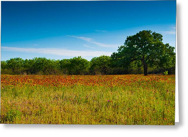 Big Tree Greeting Cards - Texas Hill Country Meadow Greeting Card by Darryl Dalton
