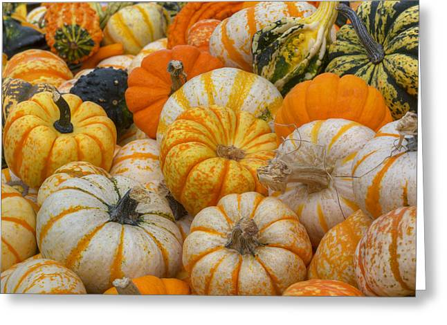 Photos Of Autumn Greeting Cards - Texas Images - Fall Colors and October Pumpkins Greeting Card by Rob Greebon