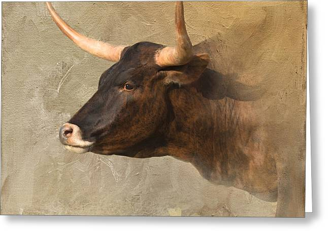 Texas Longhorn Cow Greeting Cards - Texas Longhorn # 3 Greeting Card by Betty LaRue