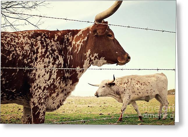 American Food Greeting Cards - Texas Longhorn Cattle Greeting Card by Trish Mistric