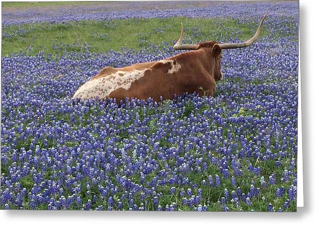 Texas Longhorn In Bluebonnets Greeting Cards - Texas Longhorn in Bluebonnets Greeting Card by Colleen Dyer
