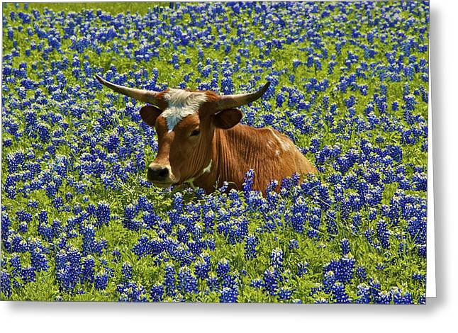Texas Longhorn In Bluebonnets Greeting Cards - Texas Longhorn  Greeting Card by John Babis