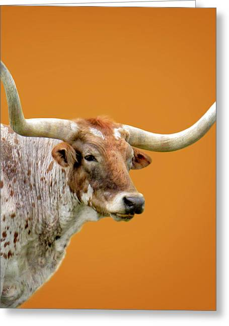 Steer Greeting Cards - Texas Longhorn Steer Greeting Card by David and Carol Kelly