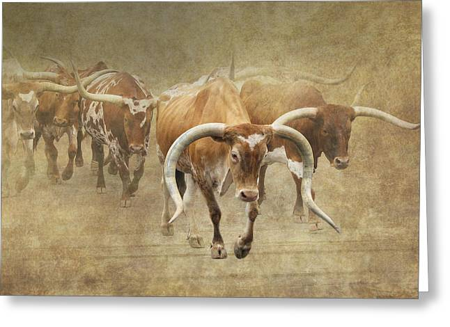 Stockyards Greeting Cards - Texas Longhorns 2 Greeting Card by Angie Vogel