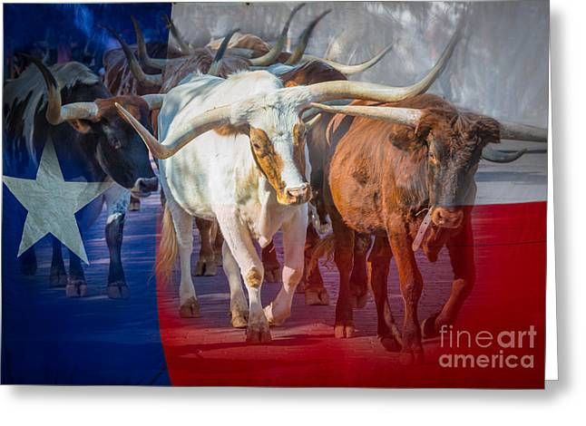 Cobblestone Greeting Cards - Texas Longhorns Greeting Card by Inge Johnsson