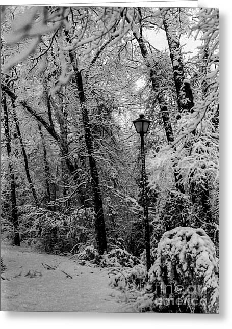 Narnia Greeting Cards - Texas Narnia Greeting Card by Michelle Burkhardt