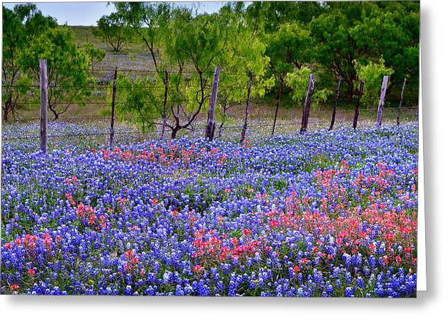 Texas Wild Flowers Greeting Cards - Texas Roadside Heaven -Bluebonnets paintbrush Wildflowers Landscape Greeting Card by Jon Holiday
