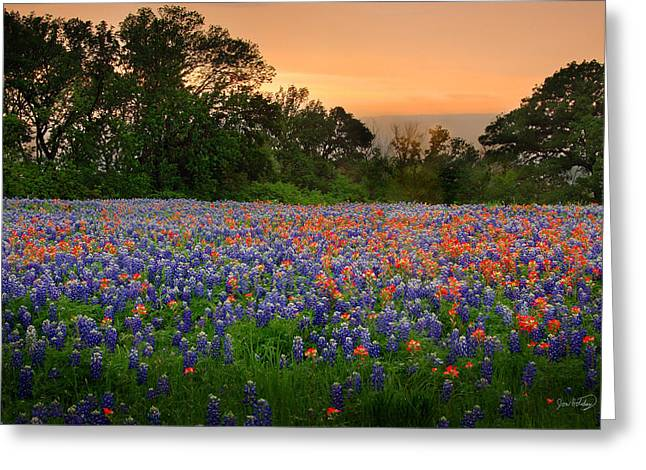 Texas Wild Flowers Greeting Cards - Texas Sunset - Bluebonnet Landscape Wildflowers Greeting Card by Jon Holiday