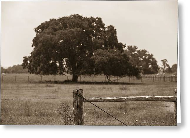 John Mcgraw Photography Greeting Cards - Texas Tree and Fence in Sepia  Greeting Card by John McGraw