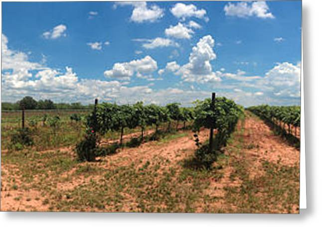 Blue Grapes Greeting Cards - Texas vineyard Greeting Card by Diane Bradley