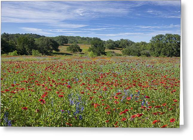 Wildflower Photos Greeting Cards - Texas Wildflower Images - Texas Hill Country Colors with Firewhe Greeting Card by Rob Greebon