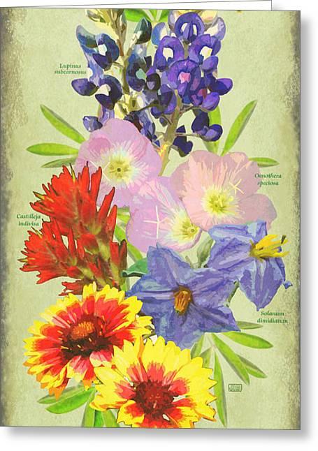 Evening Primrose Greeting Cards - Texas Wildflowers Greeting Card by Jim Sanders