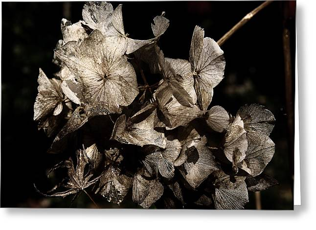 Sepia And Cream Greeting Cards - Texture of Ageing Greeting Card by Belinda Greb