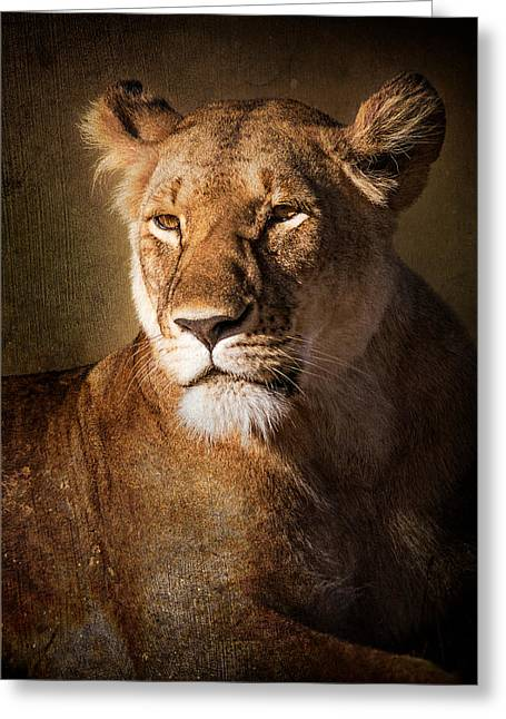 Surveying Greeting Cards - Textured Lioness Portrait Greeting Card by Mike Gaudaur