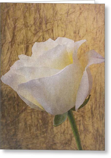 Texture Greeting Cards - Textured Rose Greeting Card by Garry Gay