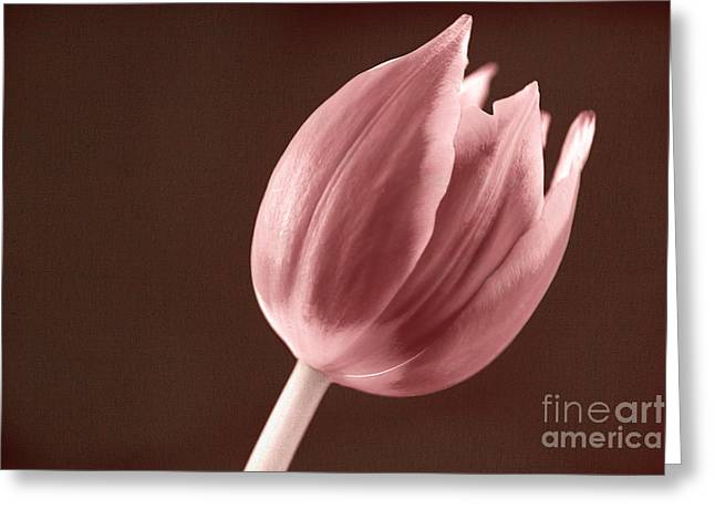 Most Photographs Greeting Cards - Textured Sepia Tulip Greeting Card by Eden Baed