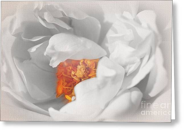 Textured Floral Greeting Cards - Textured Summer Rose Greeting Card by Eden Baed