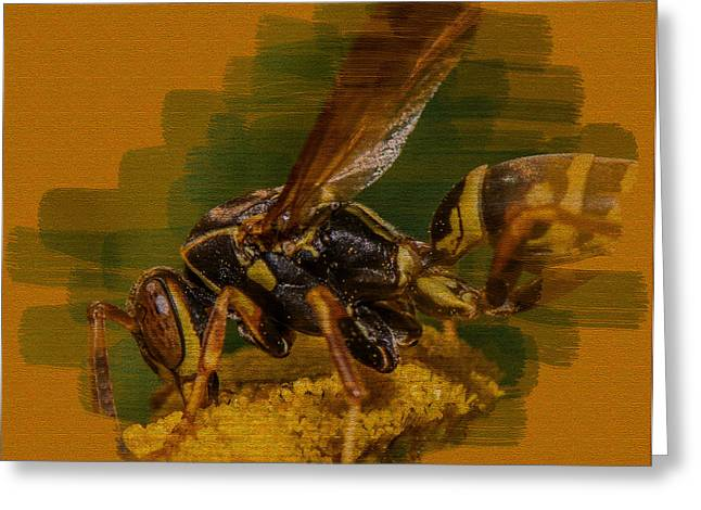 Yellow Jacket Greeting Cards - Textured Wasp Greeting Card by Paul Freidlund