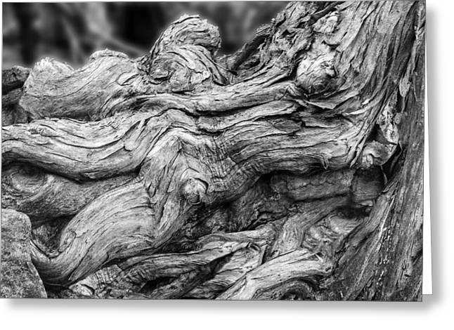 Tree Roots Art Greeting Cards - Textures of Nature Black and White Greeting Card by Jack Zulli