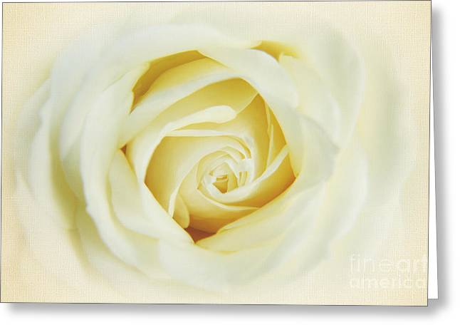 Rose Photos Greeting Cards - Textured White Avalanche Rosd Greeting Card by Eden Baed