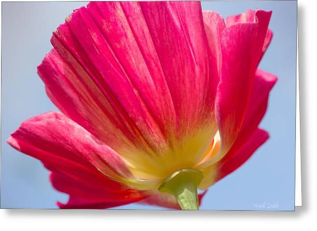 Florescence Greeting Cards - Thai Silk  Greeting Card by Heidi Smith