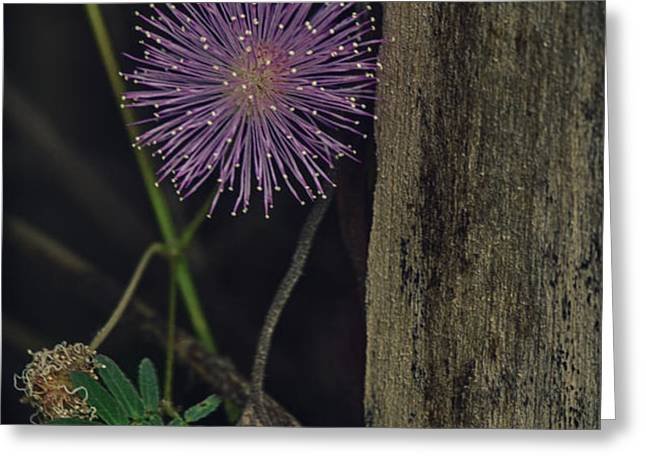 Thailand  Purple Wild Flowers Greeting Card by David Longstreath