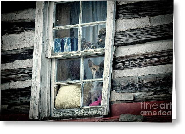 Dog In Window Greeting Cards - That Doggie in the Window Greeting Card by Jim Garrison