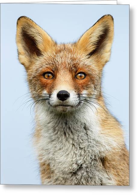 Wildlife Photography Greeting Cards - That Foxy Face Greeting Card by Roeselien Raimond