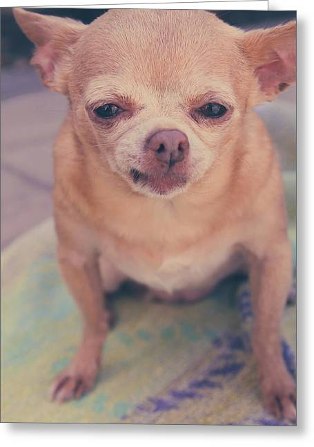 Chihuahua Portraits Greeting Cards - That Little Face Greeting Card by Laurie Search