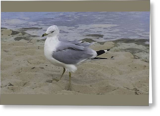 Para Surfing Greeting Cards - THAT look Greeting Card by Debra Bowers