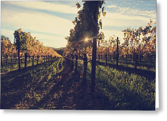 Wine Country. Greeting Cards - That Special Glow Greeting Card by Laurie Search