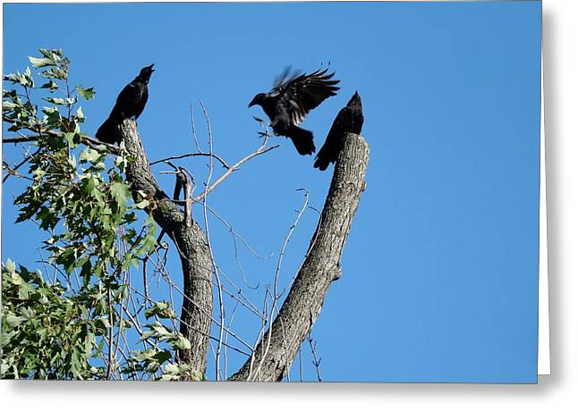 Corvus Brachyrhynchos Greeting Cards - Thats More Like It Greeting Card by Gothicolors Donna Snyder