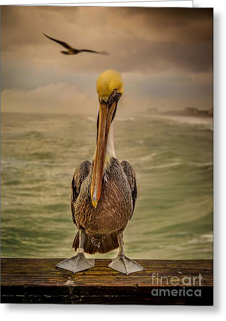 Recently Sold -  - Water Fowl Greeting Cards - Thats Mr. Pelican to You Greeting Card by Steven Reed