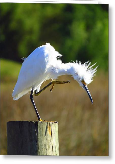 Wadingbird Greeting Cards - Thats The Spot Greeting Card by Phyllis Beiser