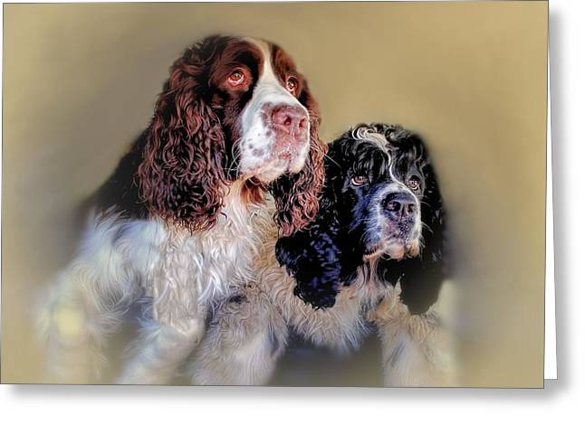 Spaniel Greeting Cards - The A Team Greeting Card by Wallaroo Images