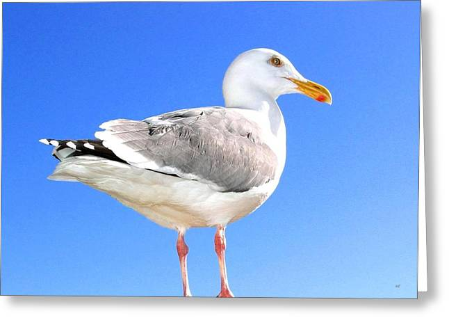 Oregon Wild Life Greeting Cards - The Admiral 2  Greeting Card by Will Borden